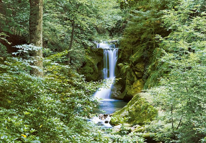Waterfall forest scene photo wallpaper mural
